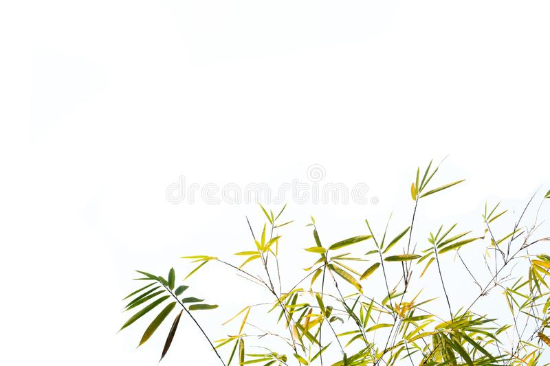 Bamboo leaves and branches on a white background stock photos