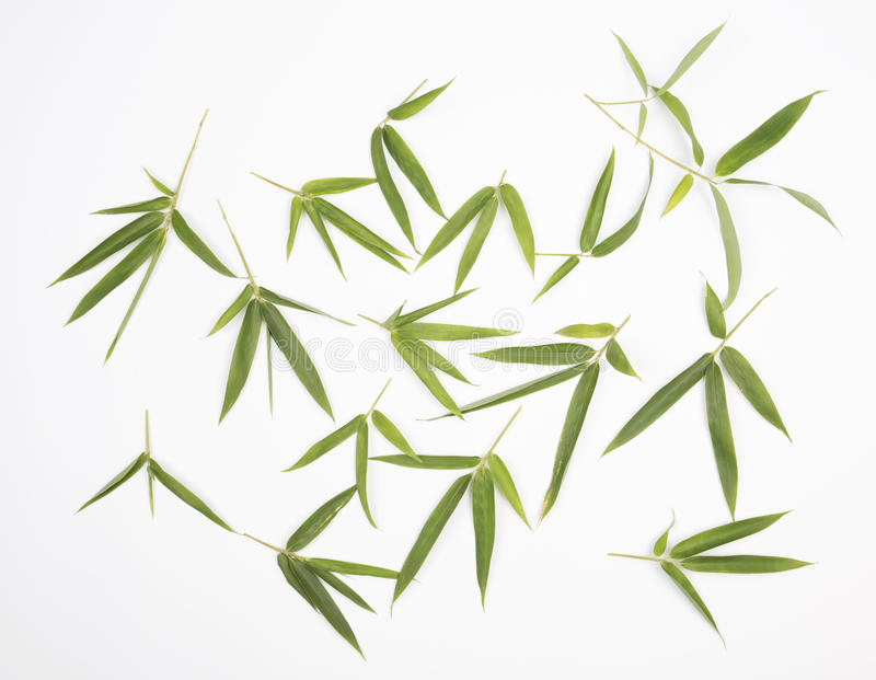 Bamboo leaves. Green bamboo leaves on white background stock image