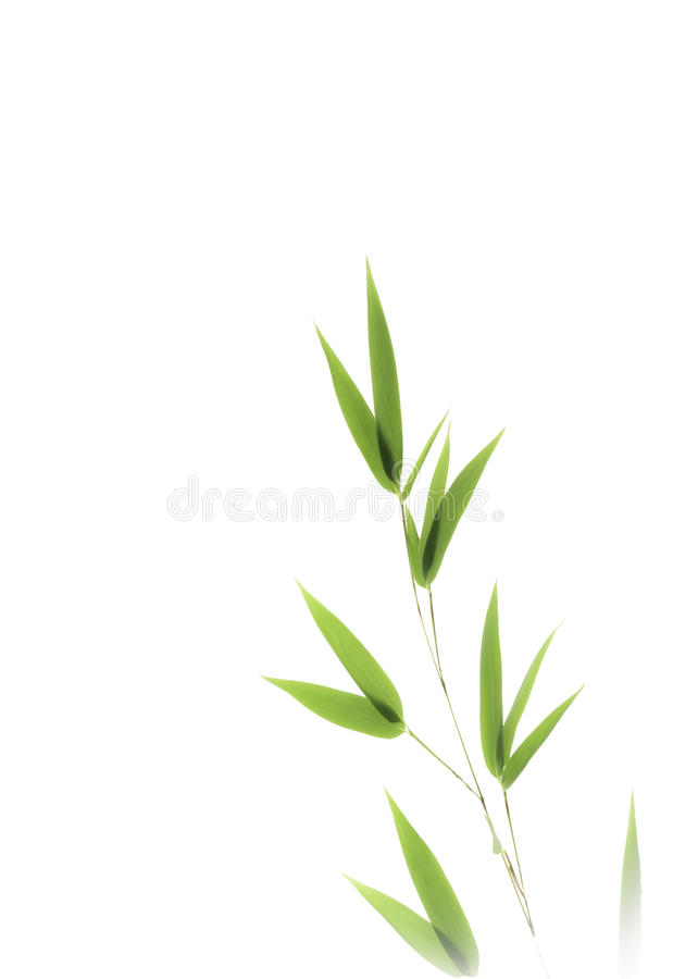 Download Bamboo leaves isolated stock image. Image of bamboo, floral - 26715263