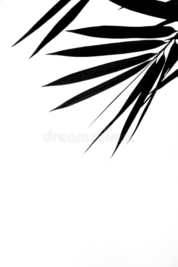 Bamboo Leaves Silhouette Background stock photography
