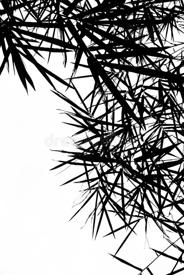 Bamboo Leaves Silhouette Background royalty free stock photos