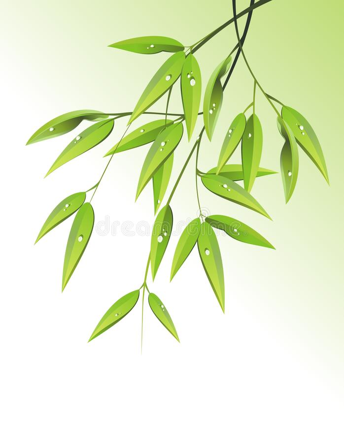 Free Bamboo Nature Background With Drops. Vector Stock Photography - 22994252