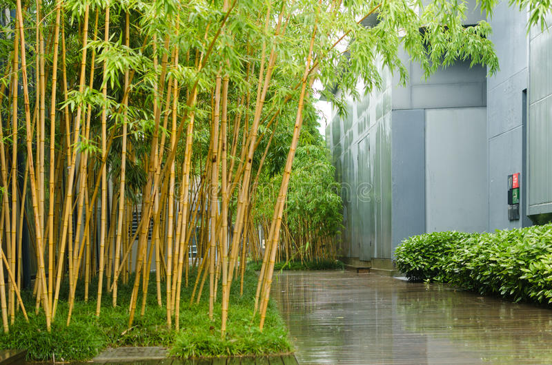 Bamboo office area, outside royalty free stock images