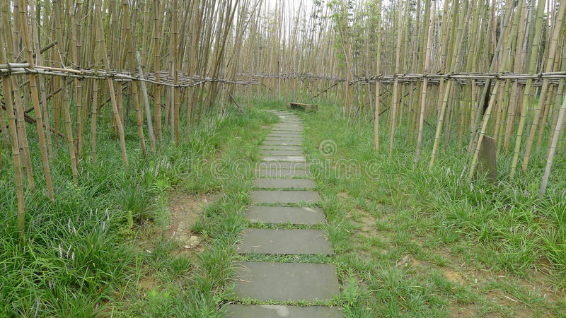 Bamboo path. Path in lush bamboo forest royalty free stock images