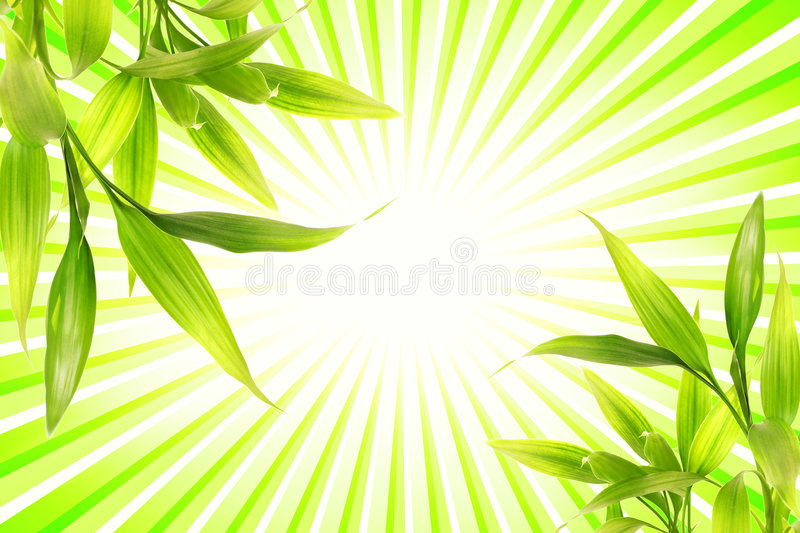 Bamboo plant. Over abstract green background royalty free stock photography