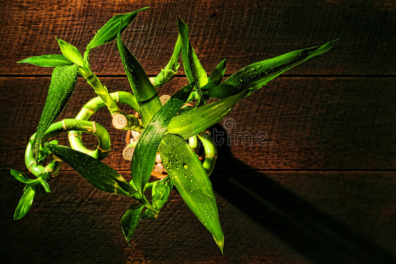 Bamboo Plant Leaves and Stems Stalks from Above stock photos
