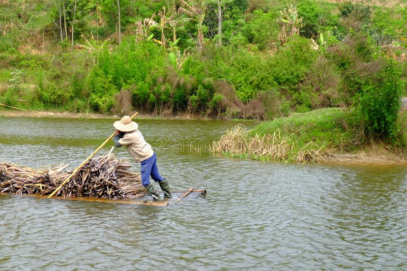 Carrying sugarcane by a bamboo raft royalty free stock photo