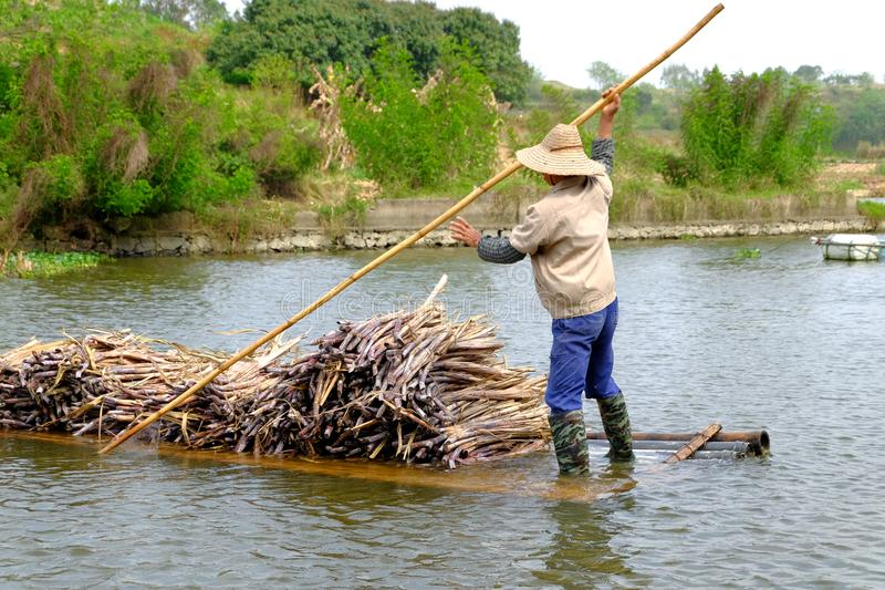 Carrying sugarcane by a bamboo raft royalty free stock images