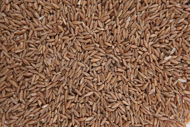 Bamboo rice royalty free stock photo