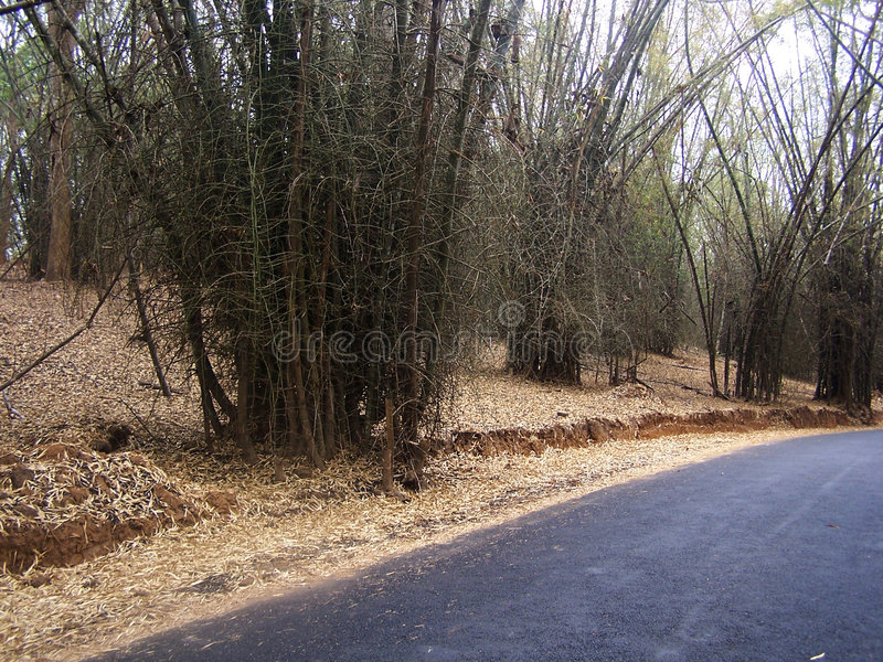 Download Bamboo Road Stock Photo - Image: 95220