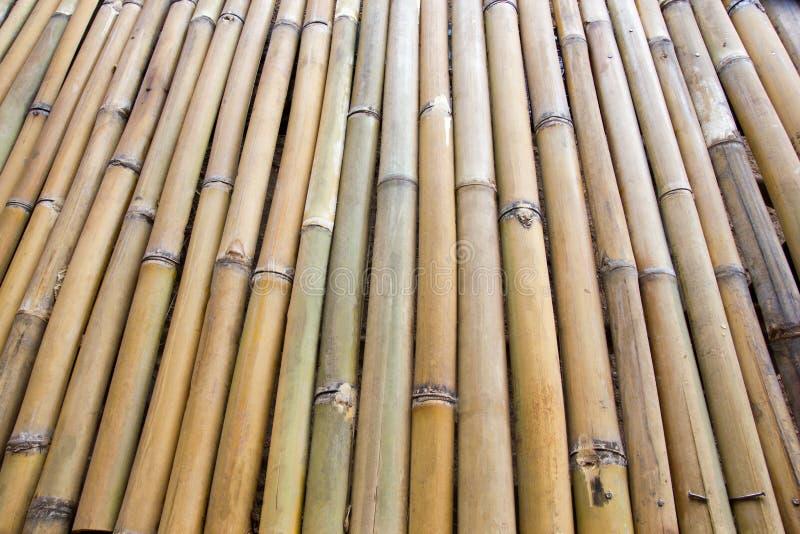 Bamboo row royalty free stock photos