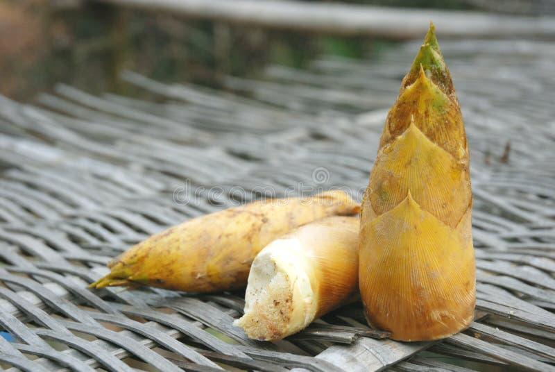Download Bamboo Shoots Royalty Free Stock Image - Image: 13259276