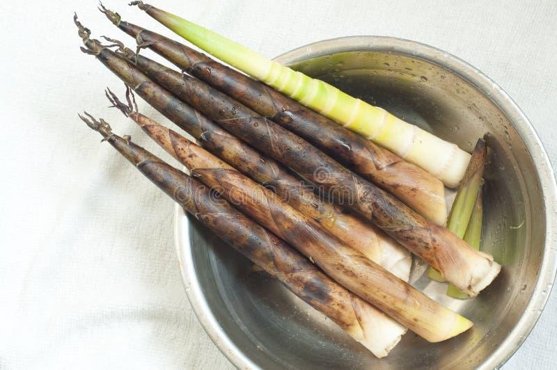 Download Bamboo shoots stock image. Image of shoots, bamboo, closeup - 13757011