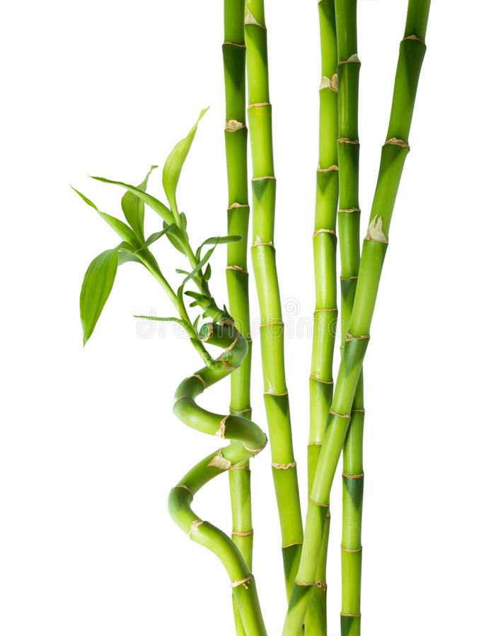 Bamboo - six stalks royalty free stock photography