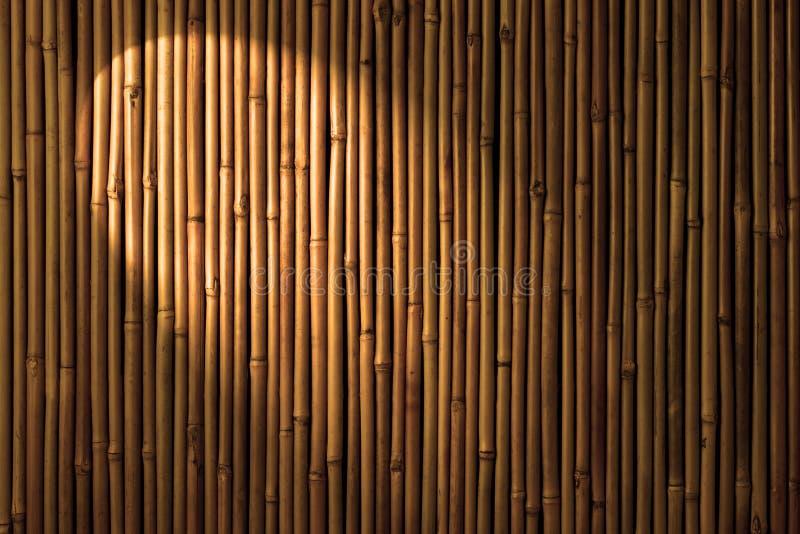 Bamboo Spotlight Background royalty free stock photos