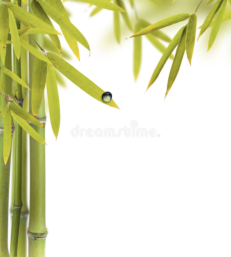 Bamboo background. Bamboo sprouts with free space for text royalty free stock photo