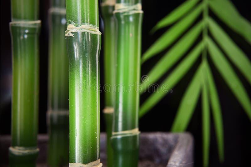 Bamboo Stalk Background royalty free stock image