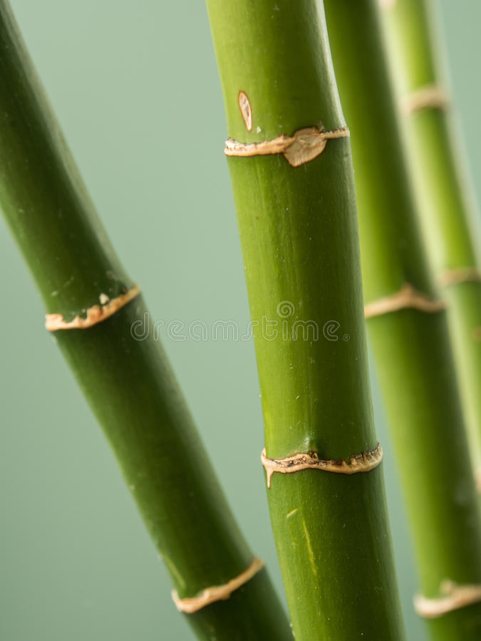 Download Bamboo stalks stock image. Image of bamboo, growth, green - 30003677
