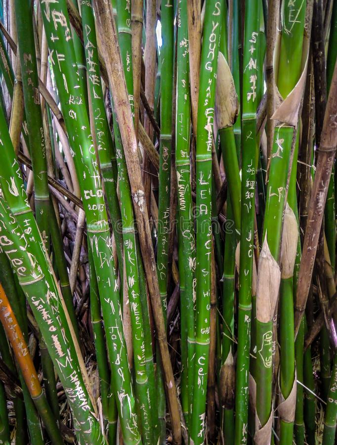 Bamboo stems engraved with names and tags royalty free stock image