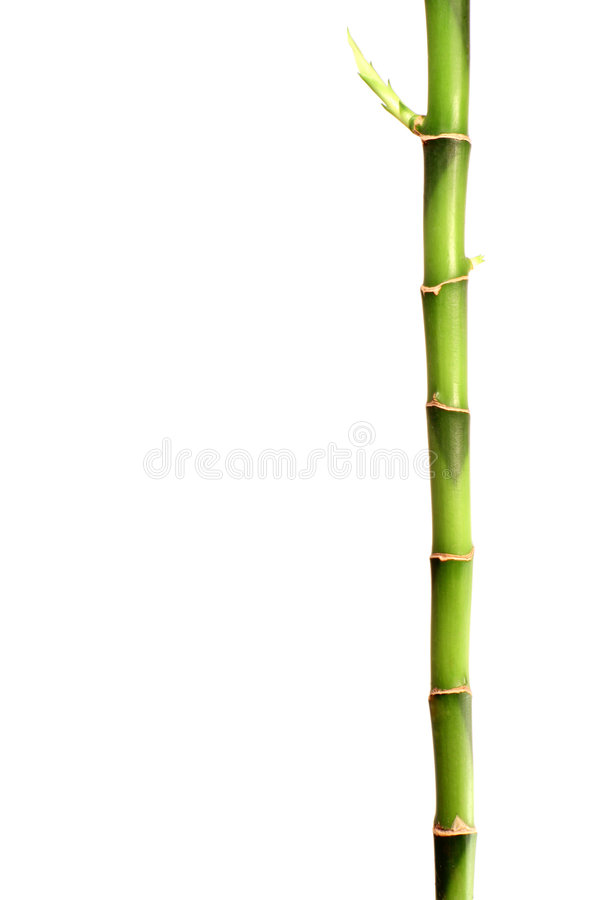 Bamboo stick. A stick of bamboo with a new shoot growing