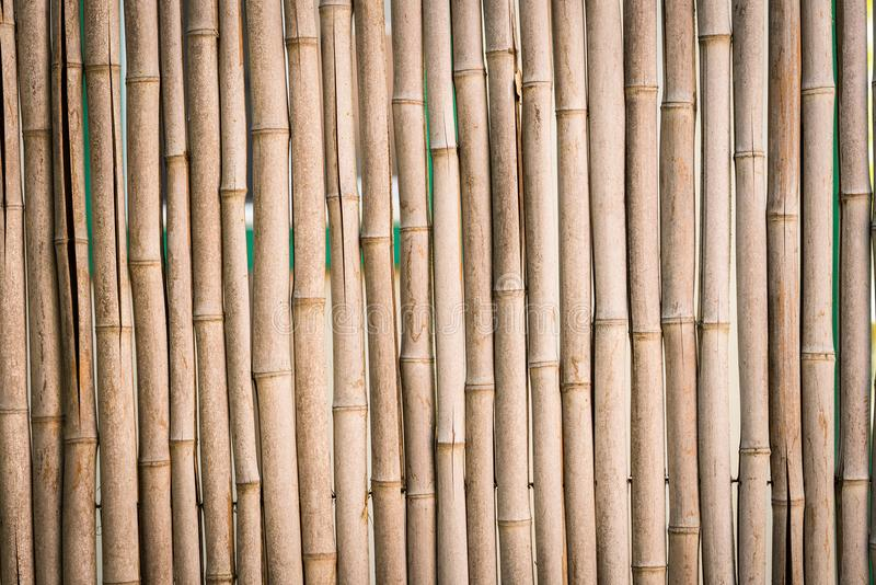 Bamboo Stick Fence. Closeup of bamboo stick fence background stock images