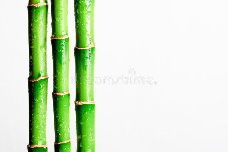 Bamboo stick. Isolated on white background stock image