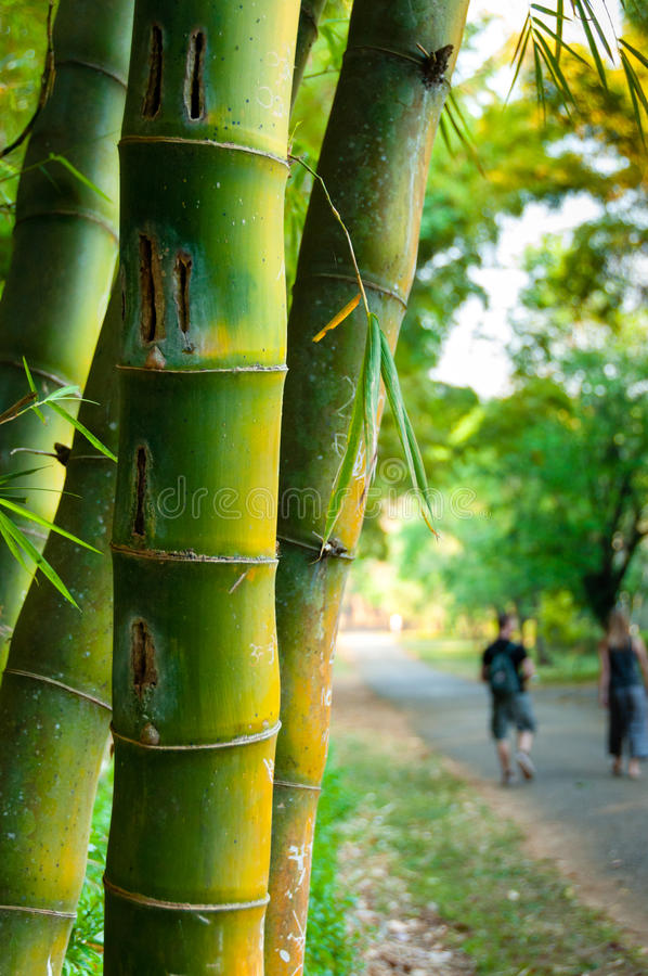 Bamboo Stcik People ~ Bamboo sticks with people in background stock photo
