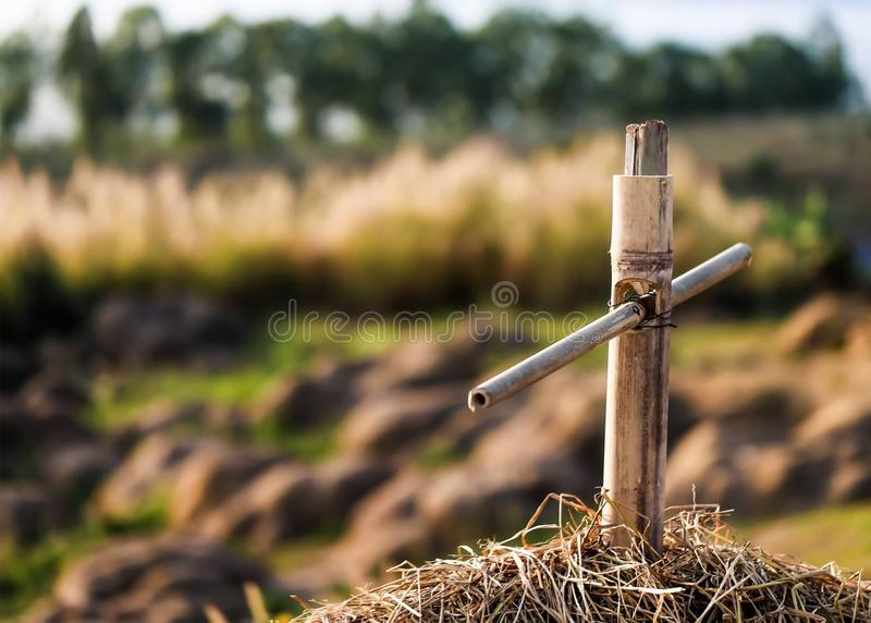 Bamboo on Straw. At my home from samut sakhon thailand royalty free stock photos