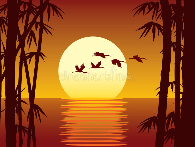 Bamboo and sunset. Vector illustration of bamboo forest, water and sunset