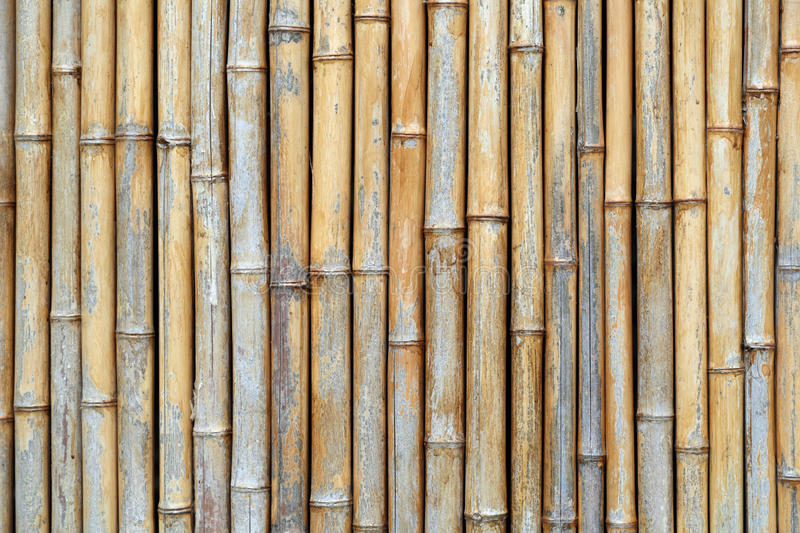 Download Bamboo texture stock image. Image of wood, pattern, bamboo - 38743413