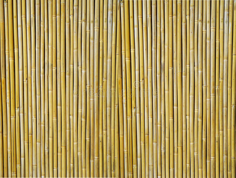 Bamboo Textured Background stock photography
