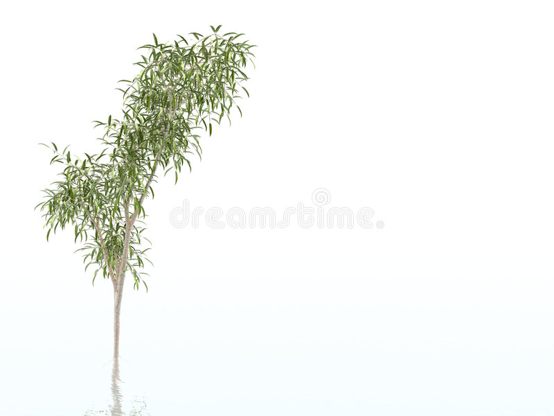 Download Bamboo Tree stock illustration. Illustration of plant, branch - 458884