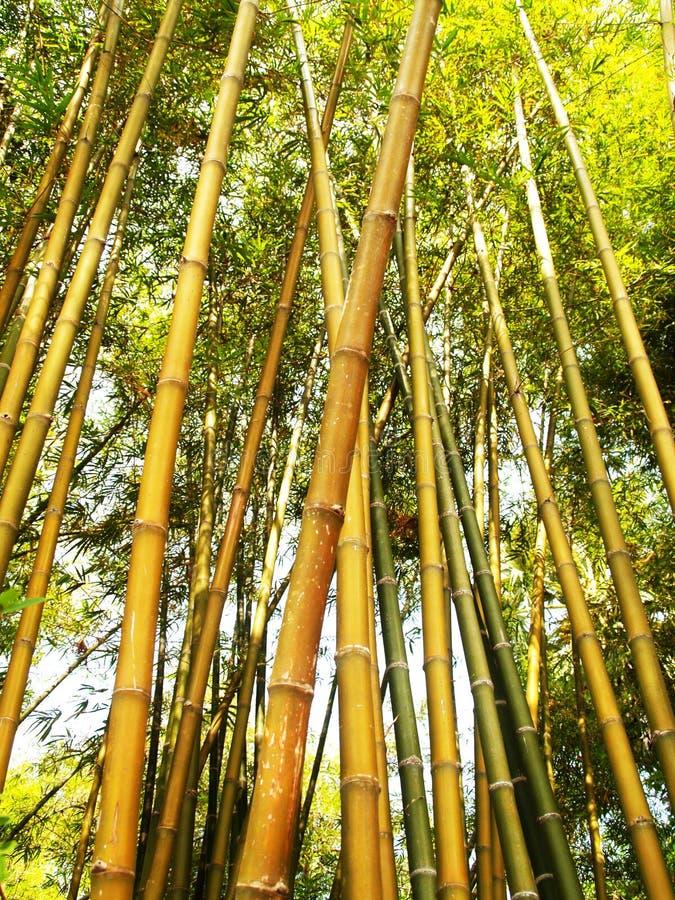 Bamboo Tree During Daytime Free Public Domain Cc0 Image