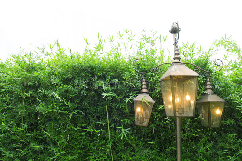 Bamboo tree fence and beautiful lamp for background usage.  stock photo