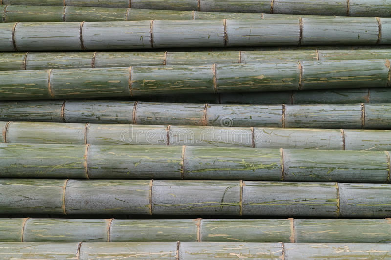 Bamboo tree. In bamboo forest stock photography