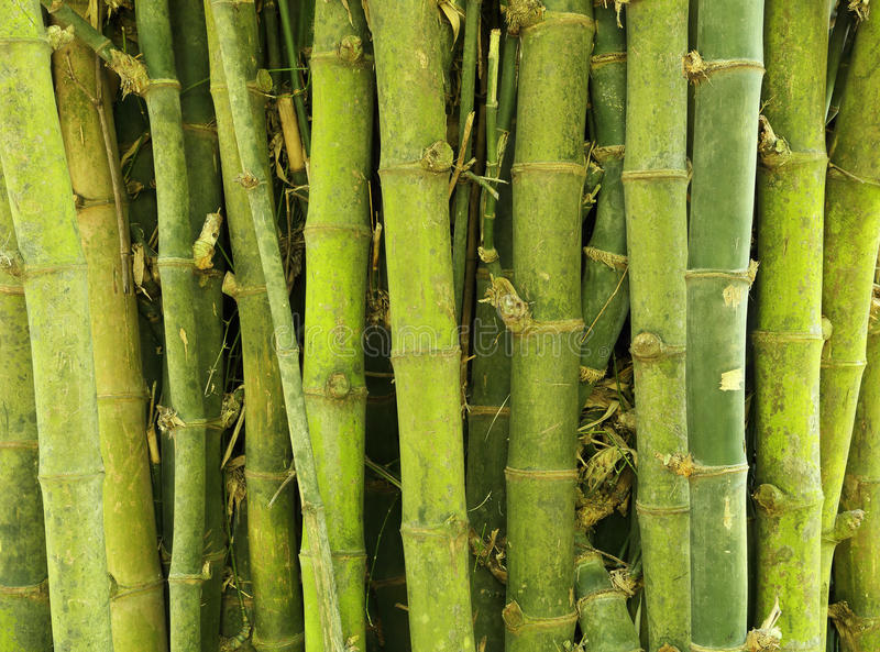 Download Bamboo Tree Texture Background Stock Image - Image of china, color: 32964005