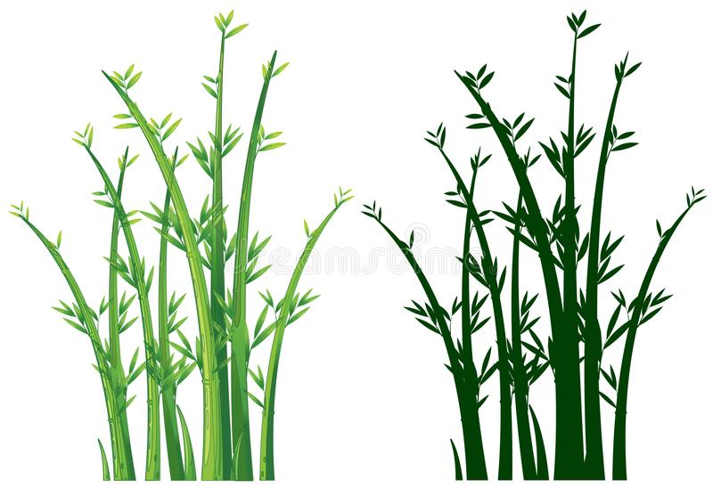 Bamboo trees in green royalty free illustration