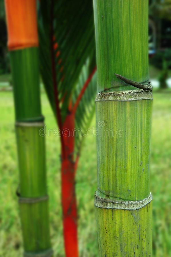 Bamboo Trunk stock image