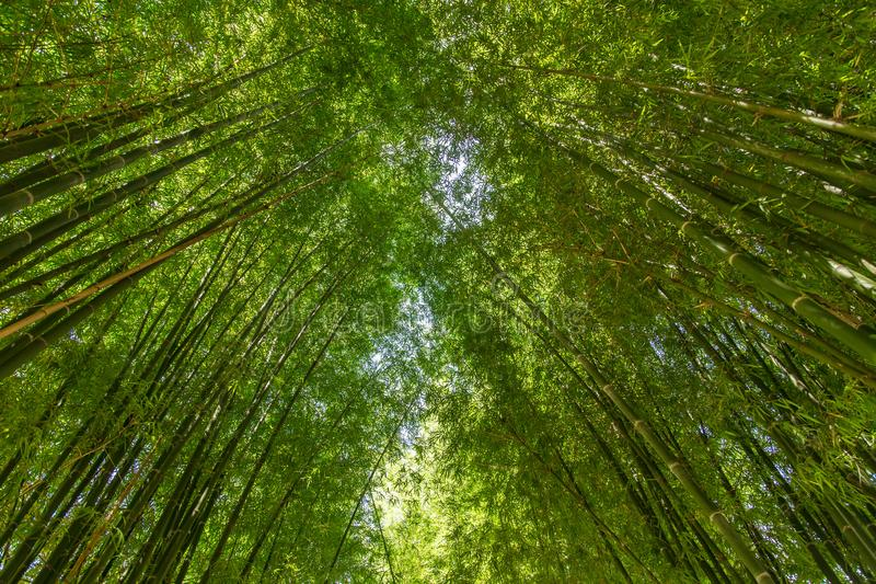Bamboo tunnel royalty free stock photography