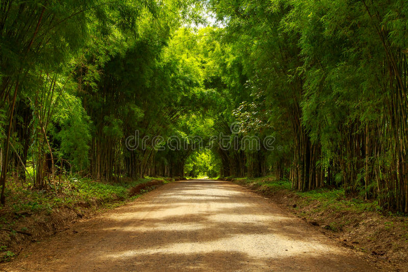 Bamboo tunnel scenery background royalty free stock photo