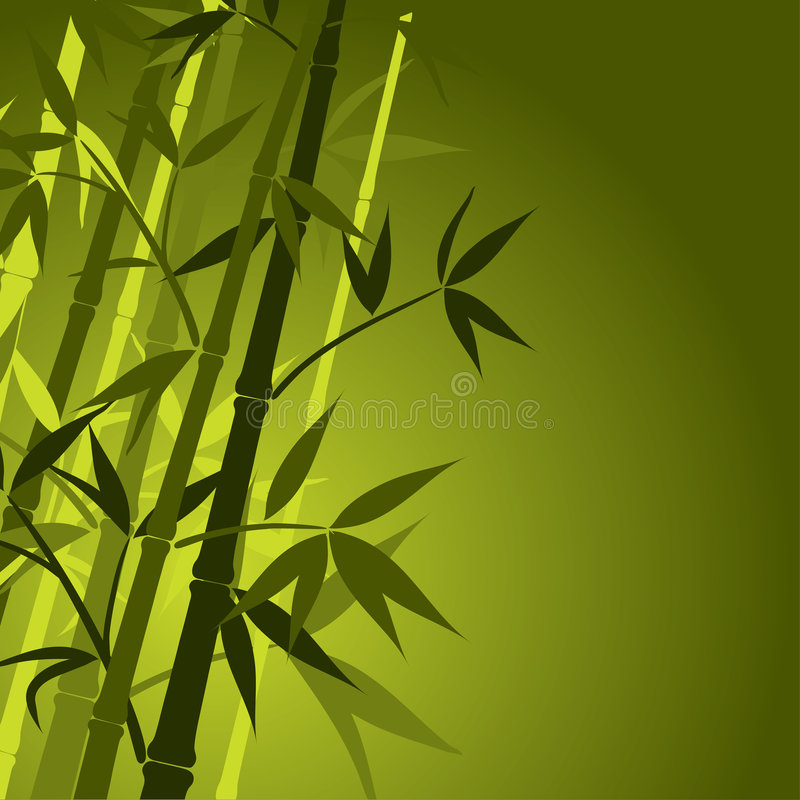 Bamboo, vector vector illustration