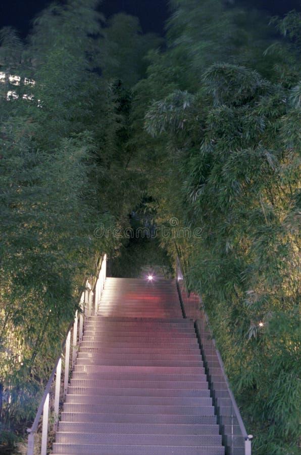 Bamboo Walkway, Night Free Public Domain Cc0 Image