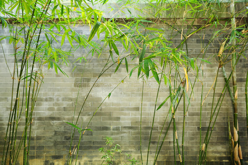 Bamboo and wall stock photography