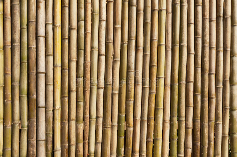 Bamboo wall. The wall of the bamboo royalty free stock images