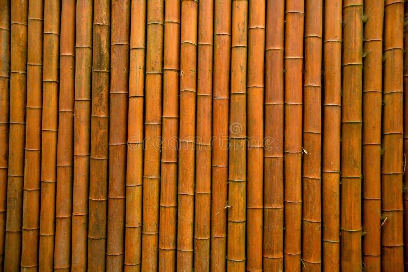 Bamboo wall/bamboo house stock photo
