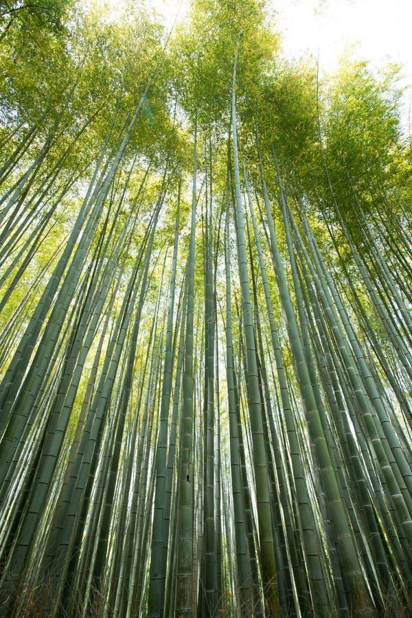 Bamboo wall royalty free stock photo