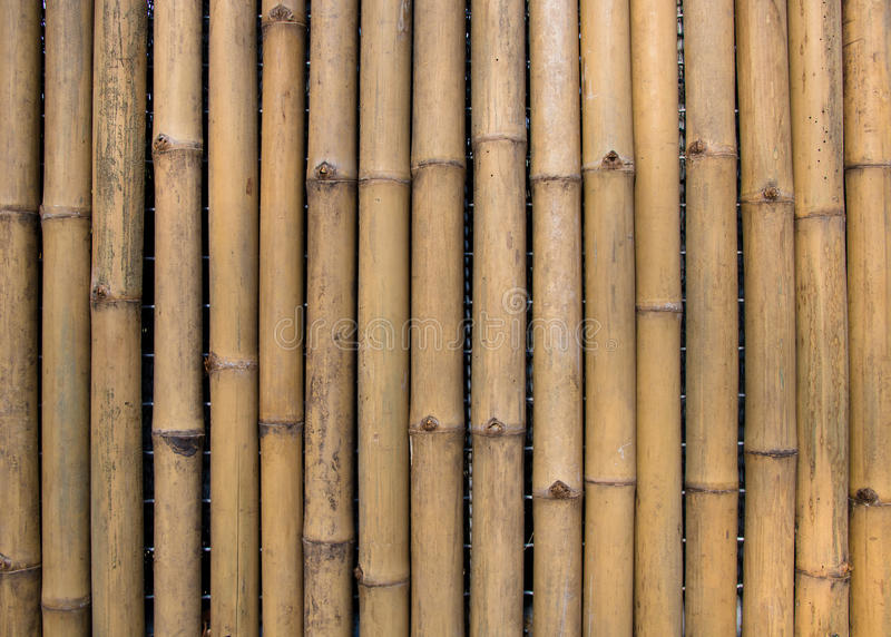 Bamboo wall texture background. Bamboo fence stock photography