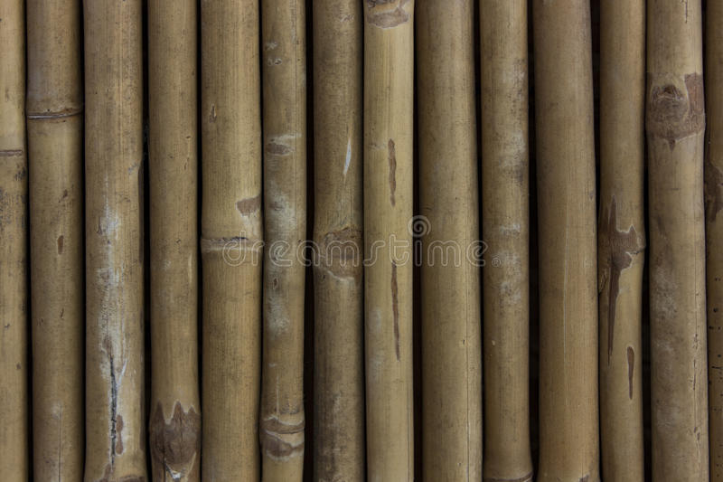 Bamboo Wall Texture stock images