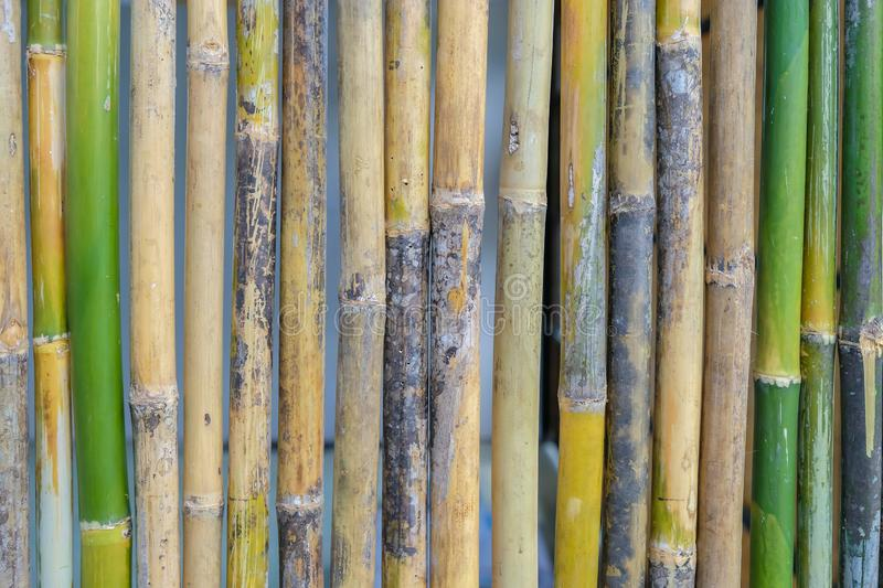 Bamboo walls are both fresh and dry royalty free stock photo