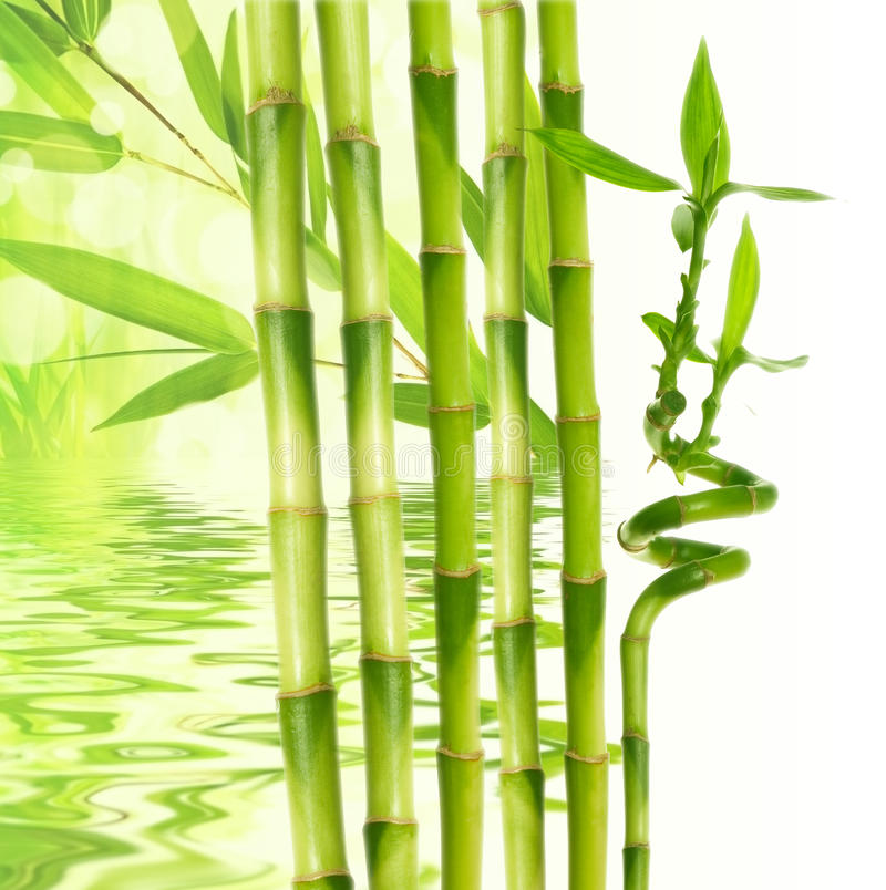 bamboo and water reflection royalty free stock image